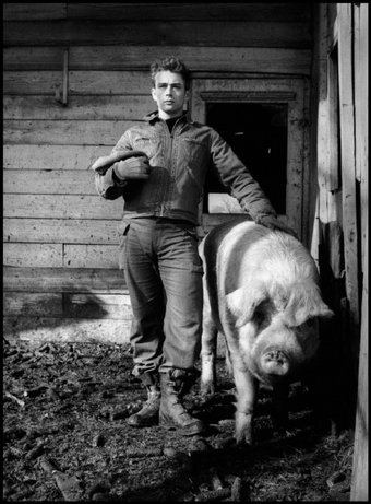 "FAIRMOUNT, Ind.—James Dean on the farm of his uncle Marcus Winslow, posing with a pig and asking himself, ""Do I belong to the animals, to the pigs, the cattle, or the goats?"" 1955. © Dennis Stock / Magnum Photos"