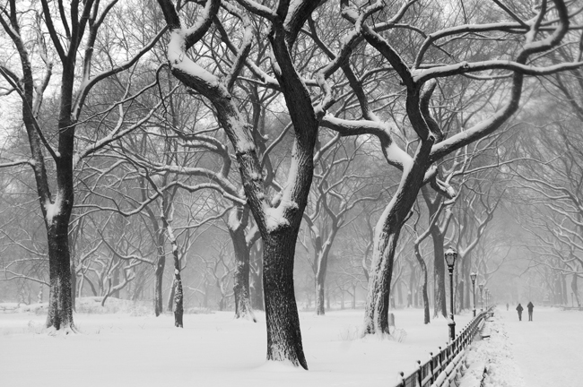 The Mall, Central Park © Doug Kim