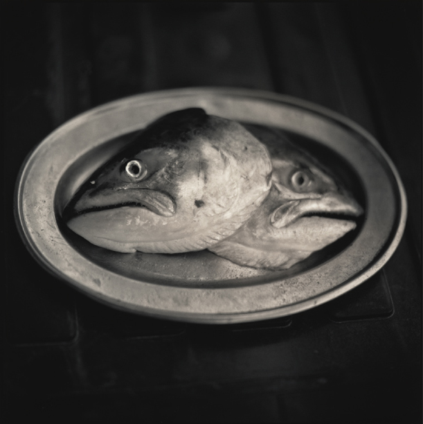 Salmon Heads, Sapporo, Japan, 2004  Hiroshi Watanabe
