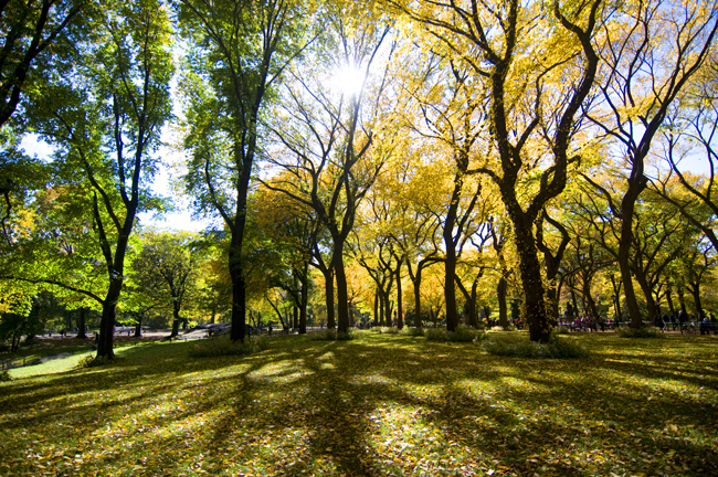 October, Central Park; Nikon D300, 12-24mm Nikkor © Doug Kim