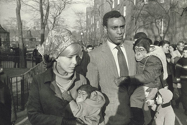 Central Park Zoo, Garry Winogrand, New York, 1967 © The Estate of Garry Winogrand