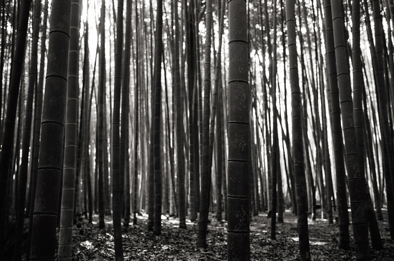 Arashiyama Bamboo Grove, Kyoto, Japan; Leica MP 0.58, 35mm Summicron, Kodak Tri-X © Doug Kim